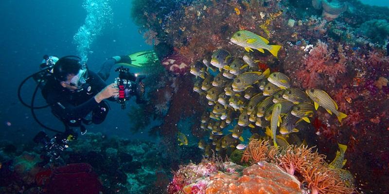 Memiliki Biota Laut Terbanyak
